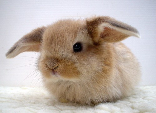 animal-bunny-cute-easter-fluffy-Favim.com-217524