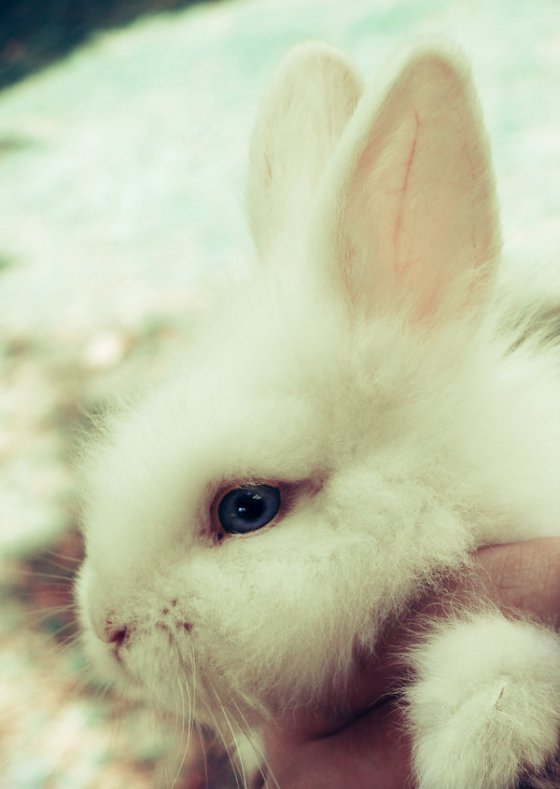 animal-bunny-cute-easter-kawaii-Favim.com-228432