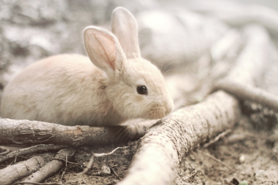 bunny-cute-nice-photography-Favim.com-536215