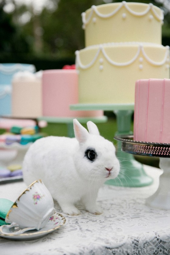 tea-party-rabbit-e1361834273488
