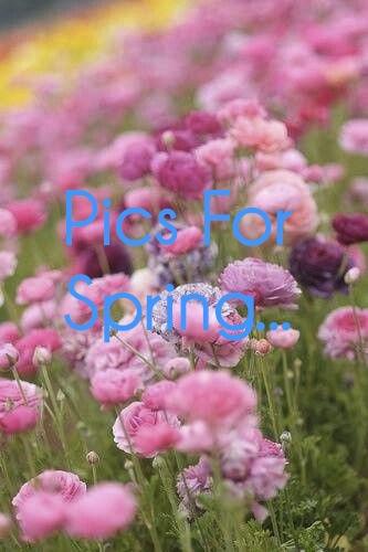 flowers-pink-small-flowers-spring-Favim.com-909092