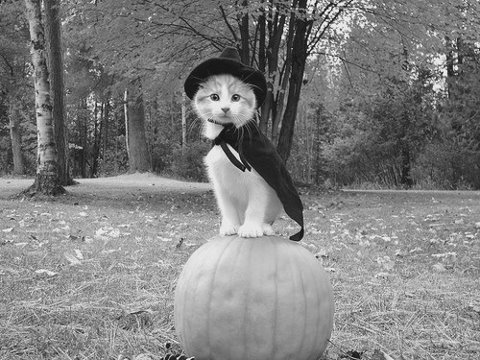 halloween-black-and-white-cat-Favim.com-661835
